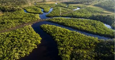 15 Fakta Hutan Amazon, Rumah Hewan Buas Nan Menyeramkan
