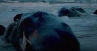 Sinopsis Film Seaspiracy (2021): Kehidupan Laut yang Dicemari Manusia lewat Sampah Plastik