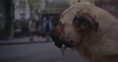 Sinopsis Stray (2021): Film tentang Kehidupan Seekor Anjing Liar di Jalanan