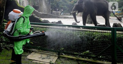 Kebun Binatang Ditutup, Hewan-hewan Kesepian Tak ada Pengunjung
