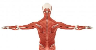 Apa yang Dimaksud dengan Otot Sinergis? Ini Jawabannya