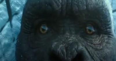 Sinopsis Film Godzilla vs Kong (2021): Dua Monster Raksasa yang Bertarung