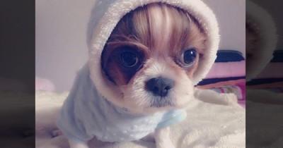 Siapa Member BTS yang memiliki Anjing bernama Mickey? ARMY Wajib Tahu Nih