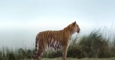 Sinopsis Film Tiger Robbers (2021): Ketika Harimau 'Nana' Menghilang
