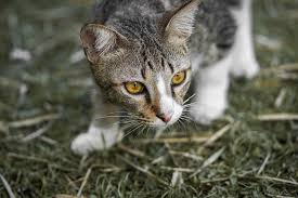 16 Fakta Kucing yang Harus Kalian Ketahui sebelum Pelihara