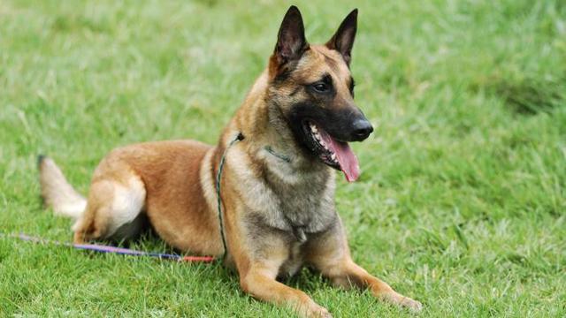 9 Fakta tentang Anjing yang harus Diketahui sebelum Pelihara